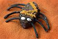 spider-cookie