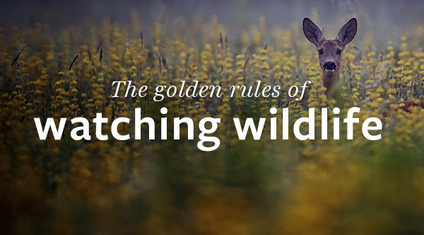The golden rules of watching wildlife