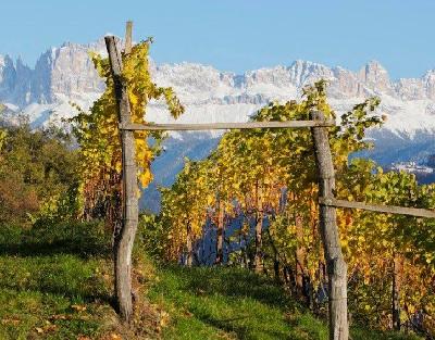 Alto Adige_FB_Image_400x313.jpg