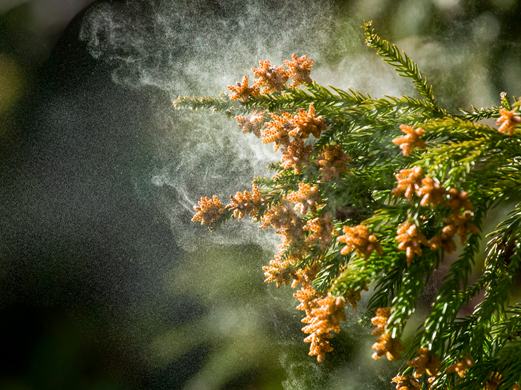 Pollen Season Is Here: 4 Tips on Managing Your Allergy
