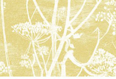 Cow Parsley Gold