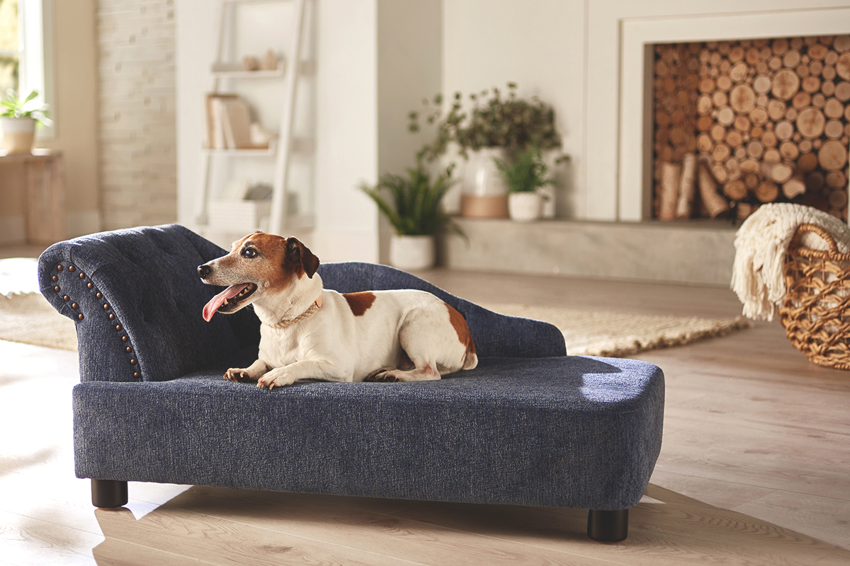 Here's Where to Find Stylish Pet Products to Fit Your Home (Partner)