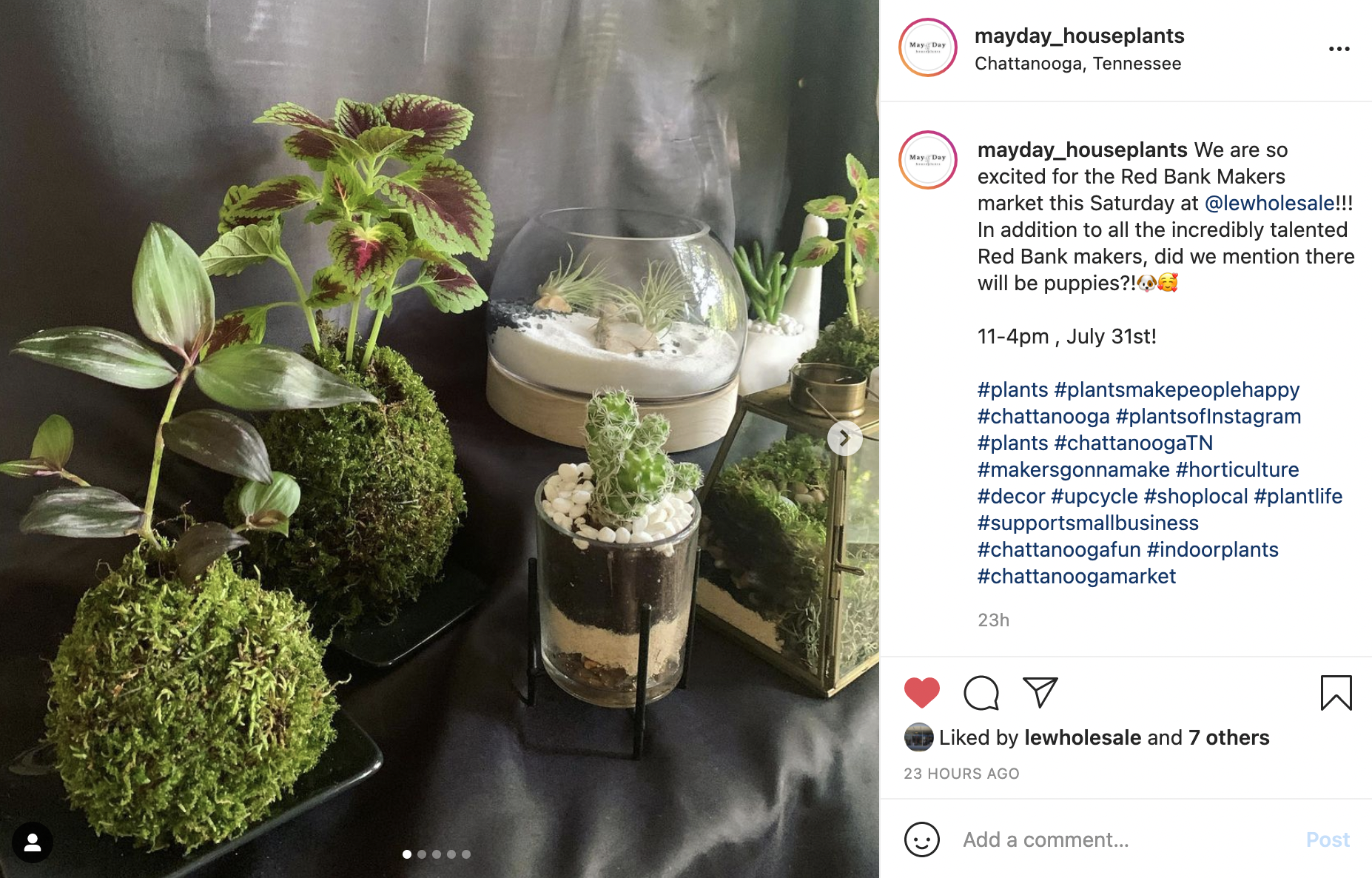 Instagram screenshot of a variety of plants and succulents—there are two plant vases made out of moss that are holding plants, plus three different terrarium-like plant holders with succulents inside